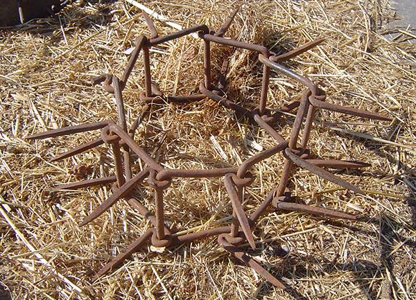 Tre antiche razze da pastore italiano - DicasaMarziali